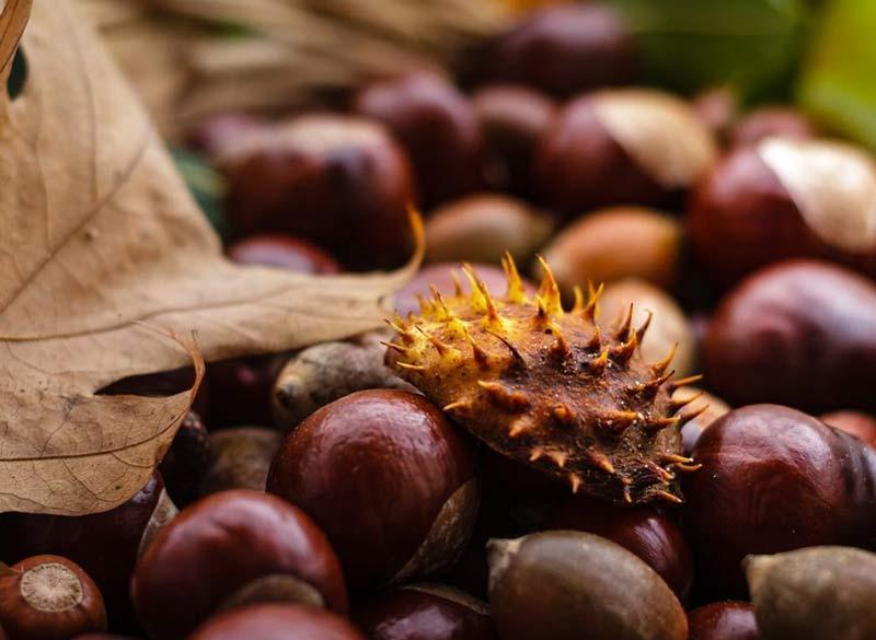 Kalorama Chestnut Festival