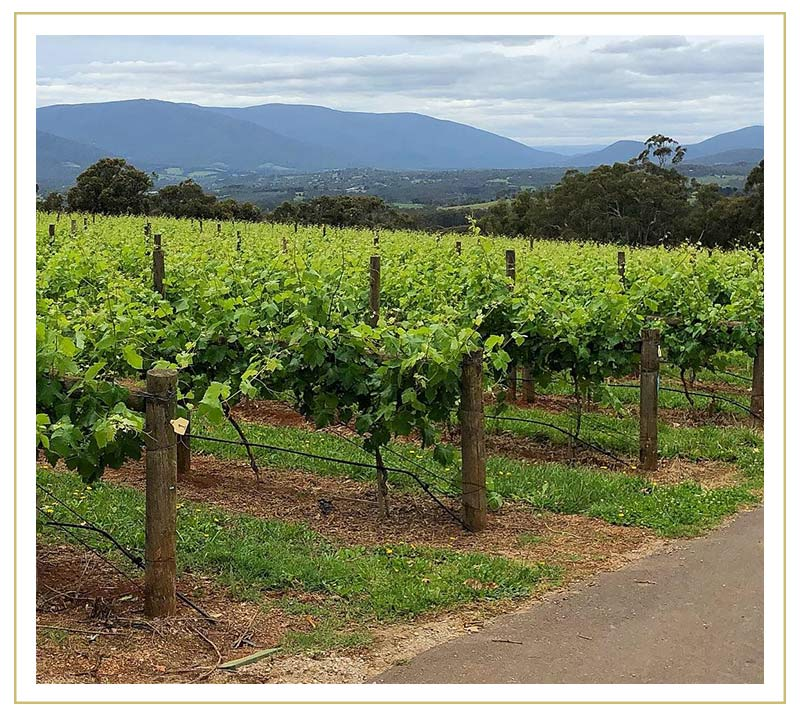 Elmswood Estate Yarra Valley Winery | Our Story