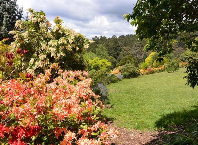 National Rhododendron Park